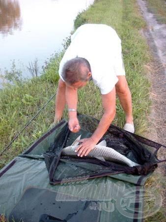 A nagyméretű merítőszák a felszerelés nagyon fontos részét képezi az amur horgászatok során. A torpedó alakú test megköveteli ezt!