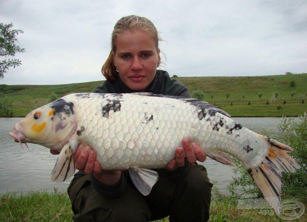 Ritkaság a koi-k és a horgászok között is