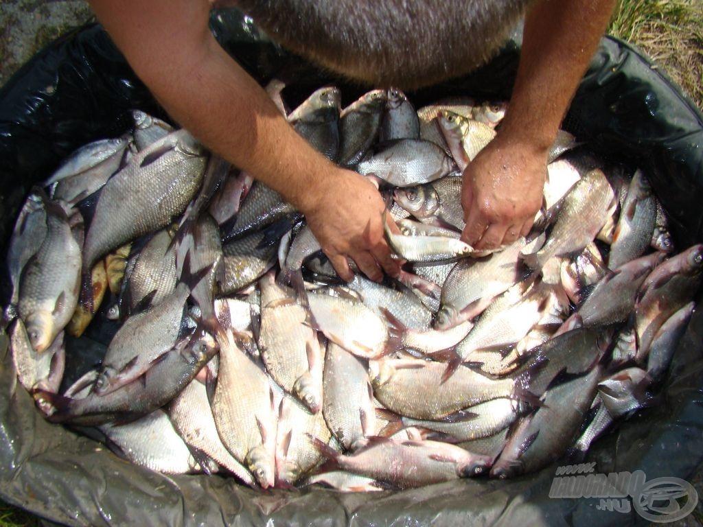 Tudatos horgászat homogén eredménye: sokszor a kevesebb a több