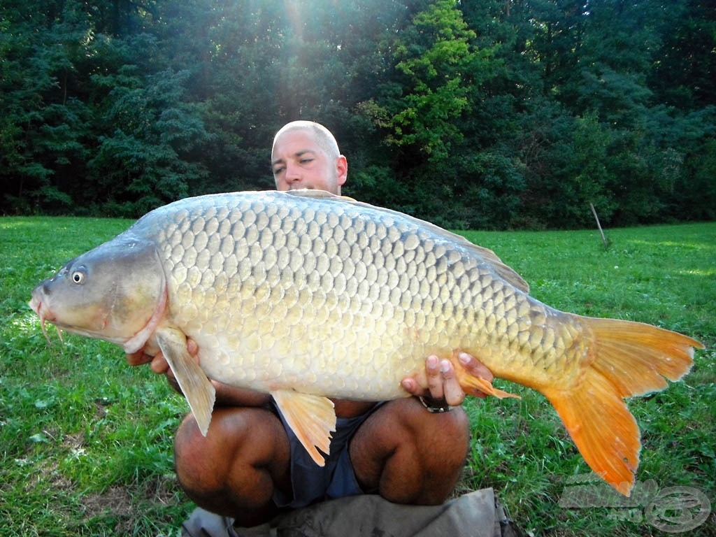 17,60 kg