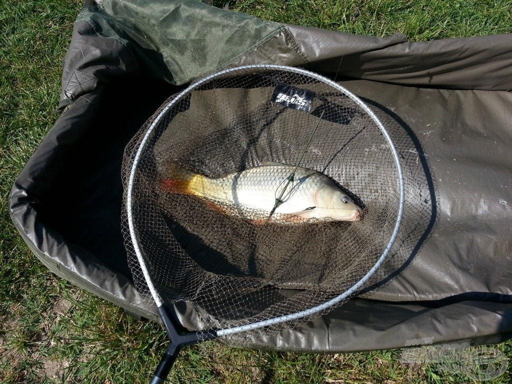 A nap első szebb hala