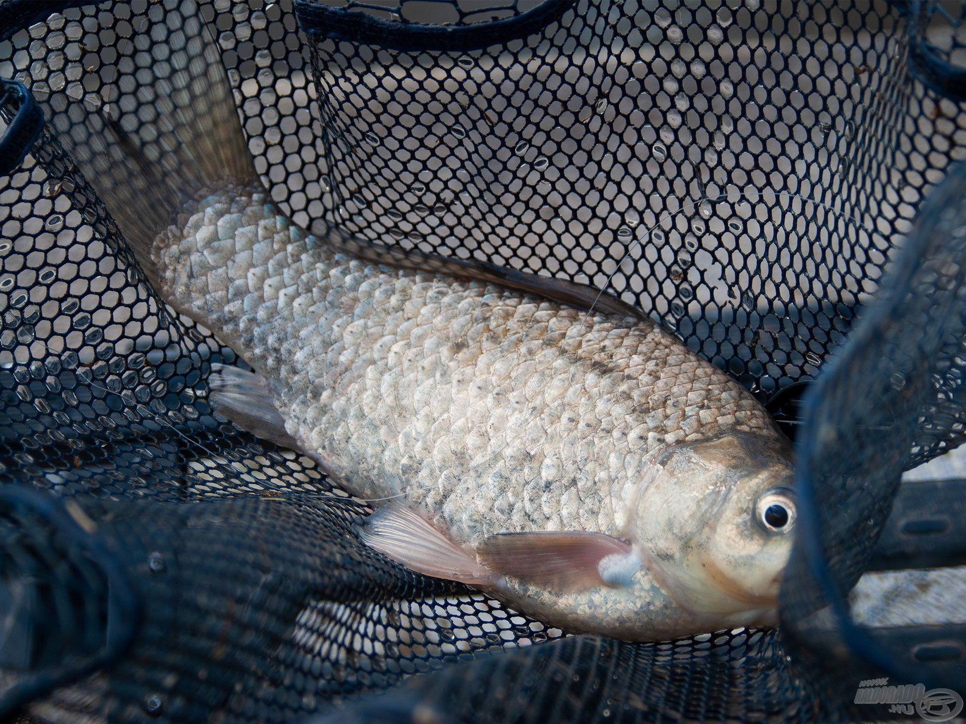 Végre én is fogtam egy halat