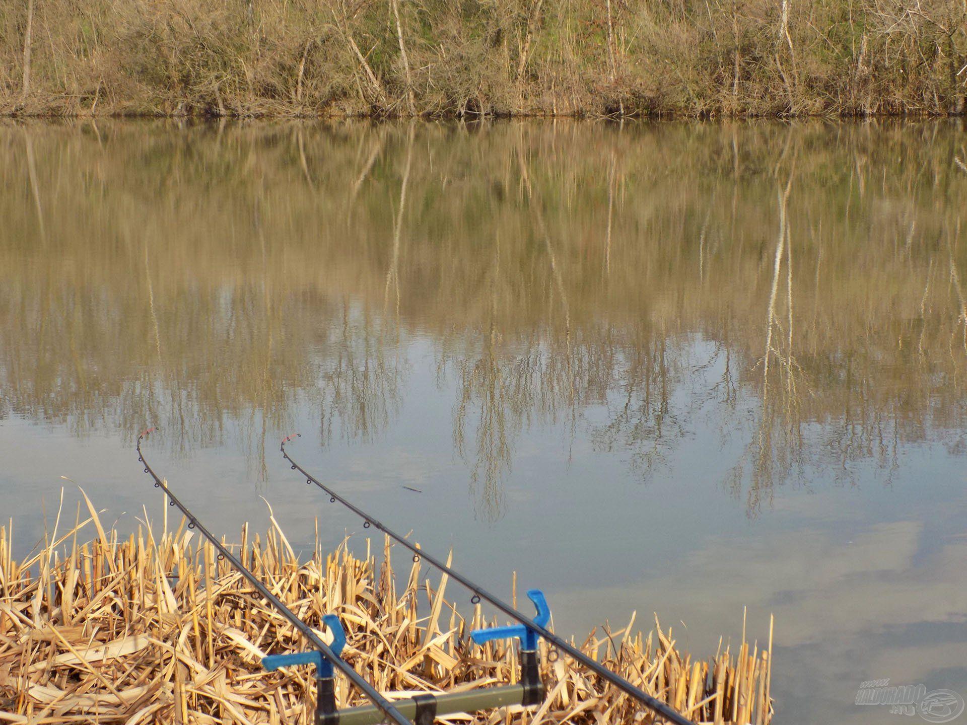 Csodálatos környezet fogadja a tóra érkező horgászokat, igazi vadregényes vízterület, ahol élmény még a kapásra várakozni is. Feederbotjaim beélesítve vártak az első rezdülésre