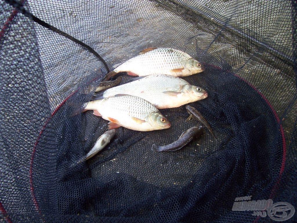 A 3. horgászat terítéke hűen tükrözi az egész teszthorgászat sorozatot. Apró gébek és néhány 20-30 dekás keszegféle