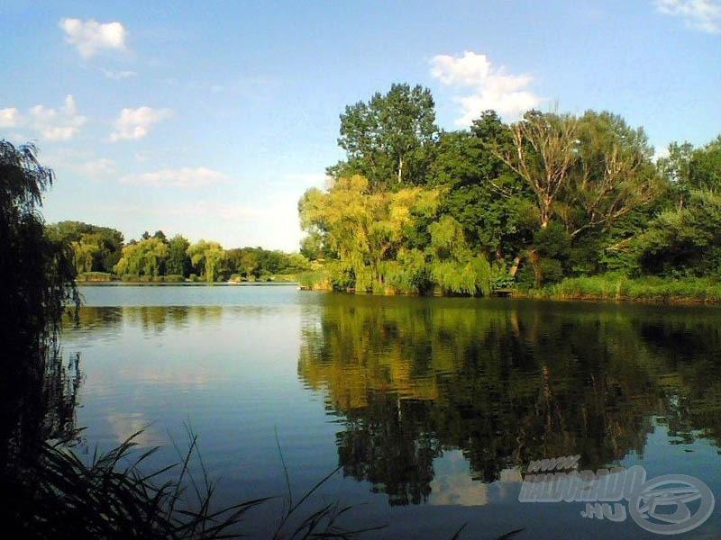 A Lőrintei-tó nyáron