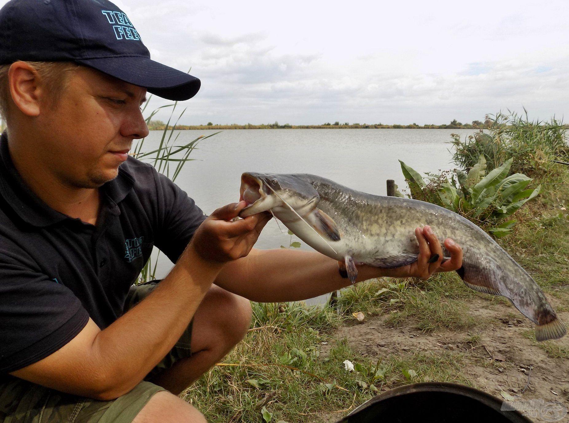 Ohaton sose tudhatjuk, hogy éppen mi akadt a horgunkra! A horgászat meglepetéshala lett ez a szép szürkeharcsa, amely a pontyokat beelőzve húzta el a felkínált pelletet