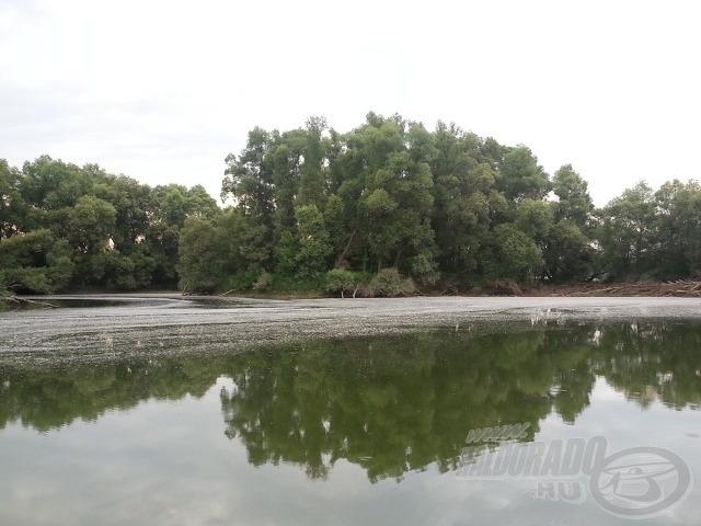 Kis-Duna felszínén a nyárfaszösz akadályozta a pergetést