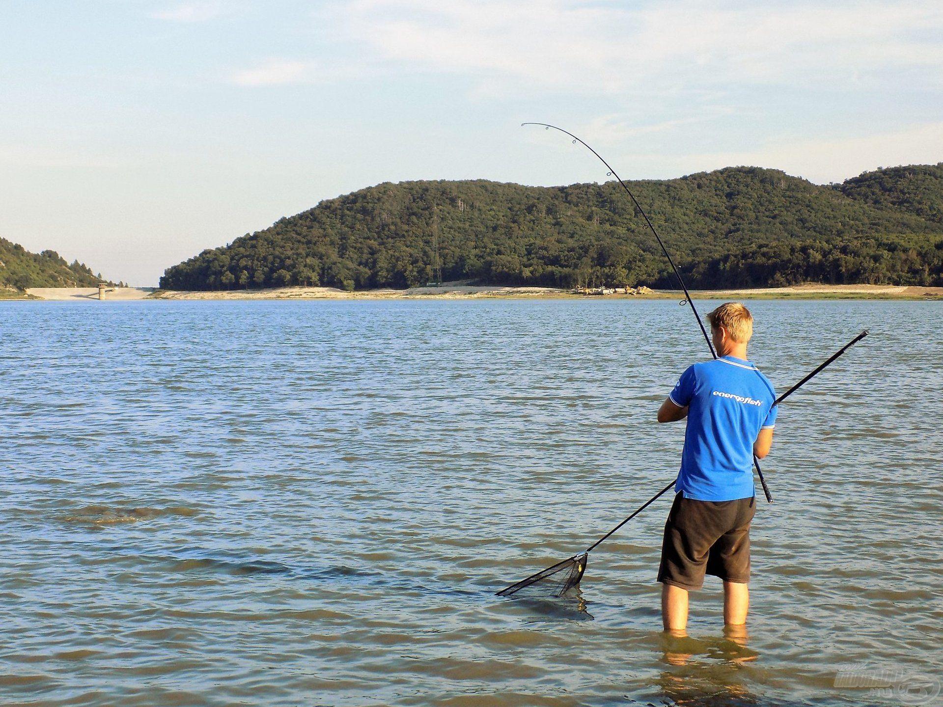 Óráknak tűnő percek. Nagy súly alatt hajlik a bojlis pálca, a partközeli, sekély zónában óvatosan történik a fárasztás