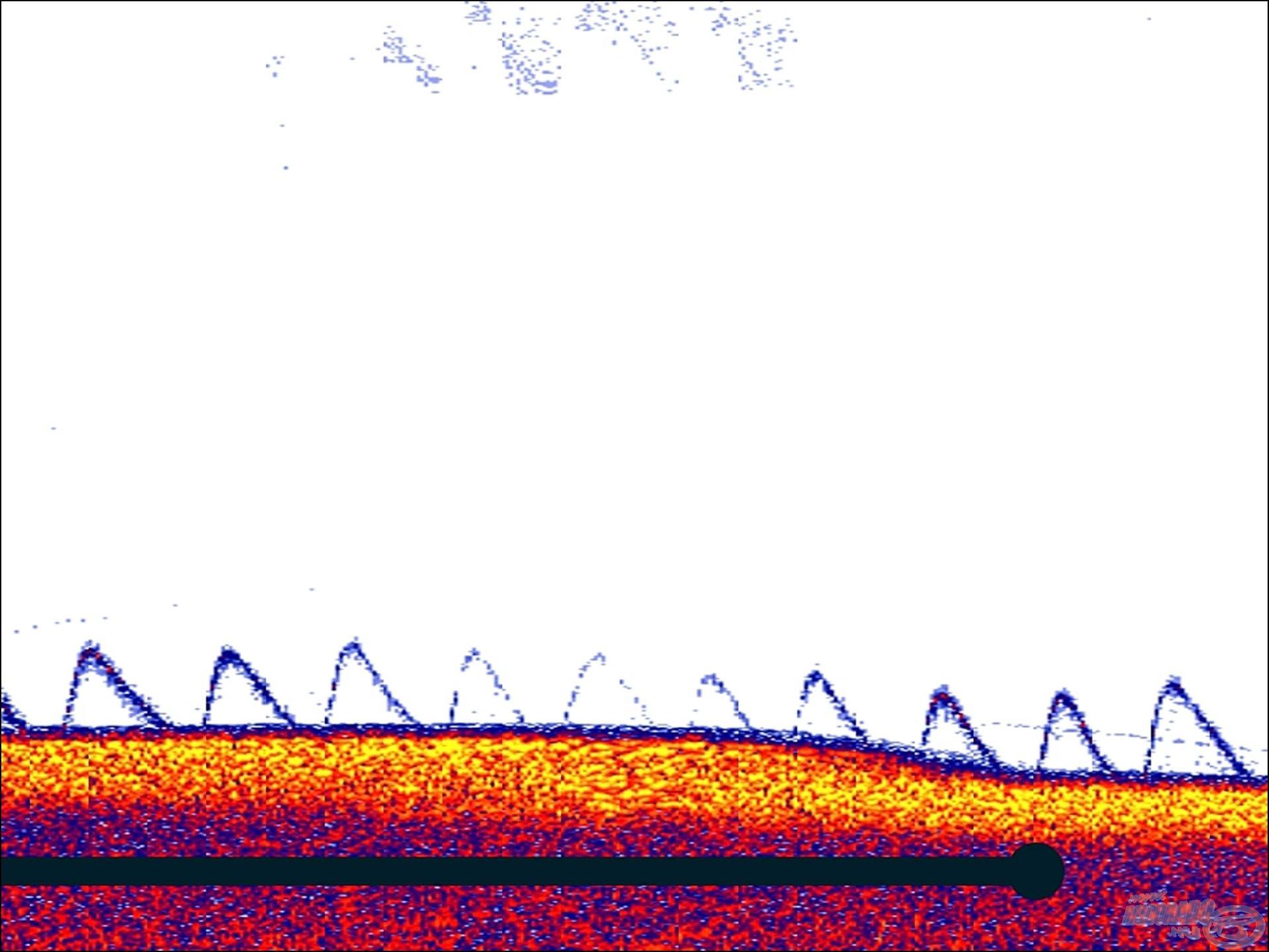 Vertikális horgászat során jól tudjuk ellenőrizni a csalink elhelyezkedését. Itt az látszik, amikor a jeladó alól elkezdtem oldalra kivezetni a csalit, megfigyelhető, ahogy a jel elhalványodik, majd amikor visszavezetem, újra felerősödik