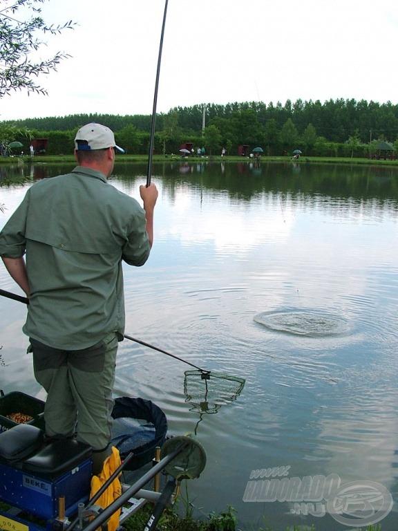 Gyorsan az etetésre találtak a halak