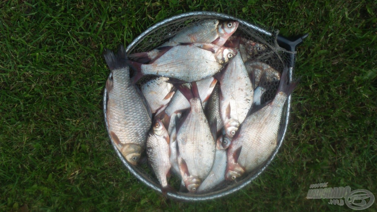 Szép zsákmánnyal zártam a horgászatot