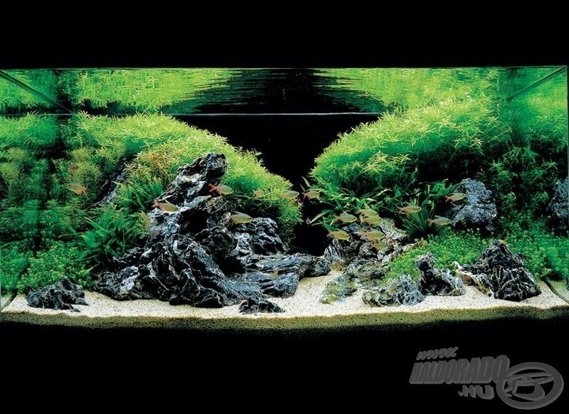 Fragrance of summer breeze 90 x 45 x 45 (cm) 180 liter. A képen látható Seiryu kő az ázsiai akvaristák elsőszámú kedvence