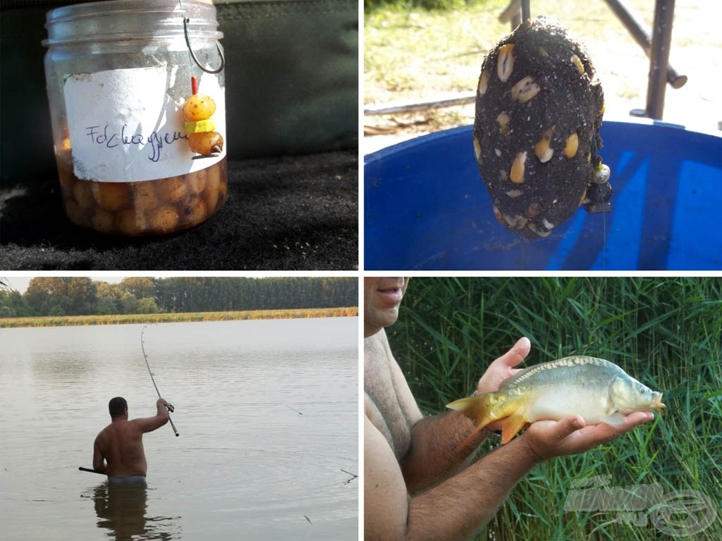 Próbálkozások és halak 2.