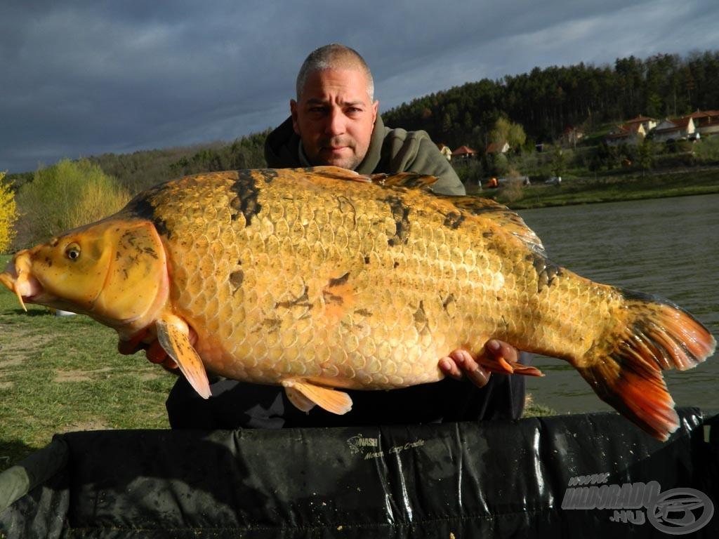"""Ez a 14,60 kg-os """"aranyhal"""" egyben koi ponty rekordom is"""