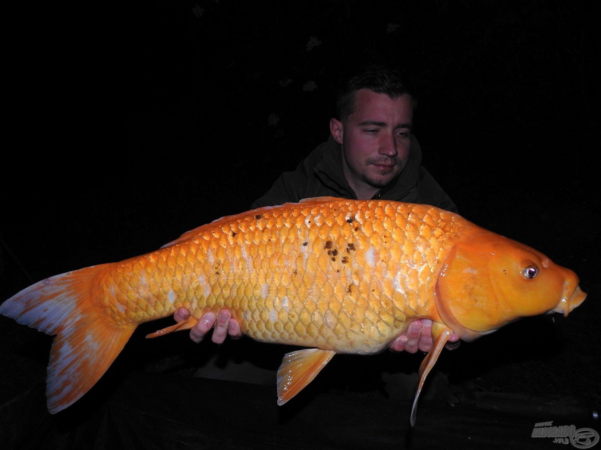 Újabb szép hal színesítette esténket