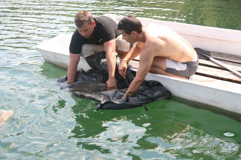 Természetesen fényképezés után minden általunk kifogott hal visszakerült az éltető elemébe, a vízbe!