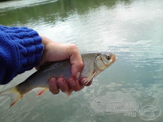 Második halam már szebb volt