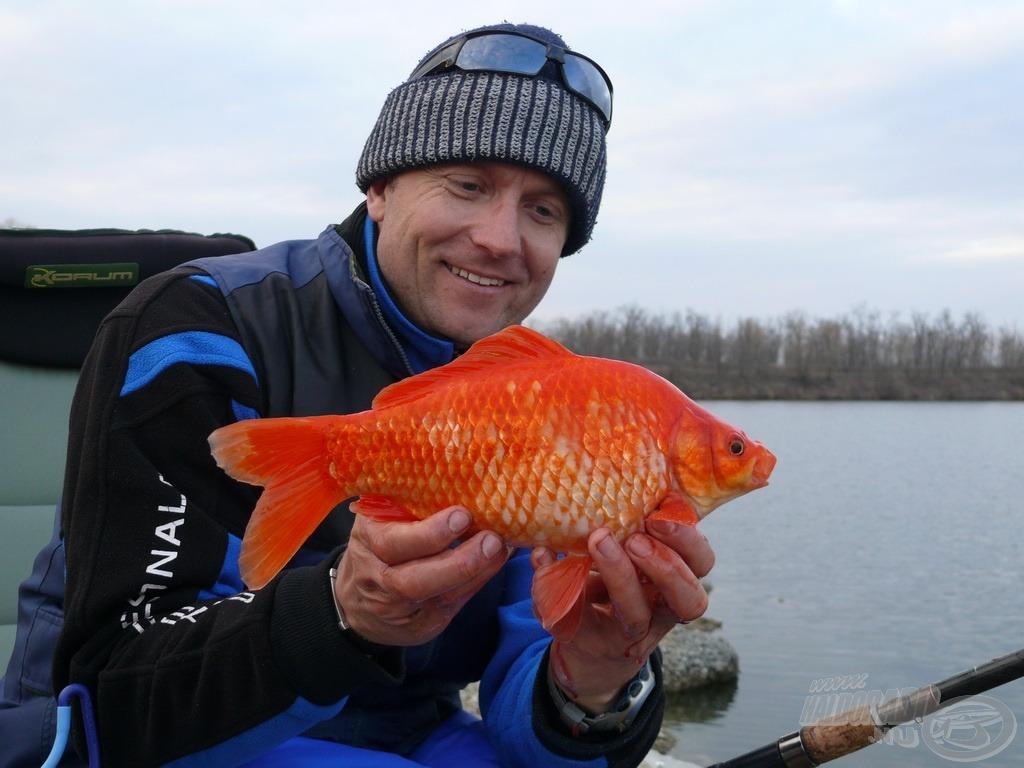 A színes zsinór talán vonzza a színes halakat? Nem! De nem is riasztja!