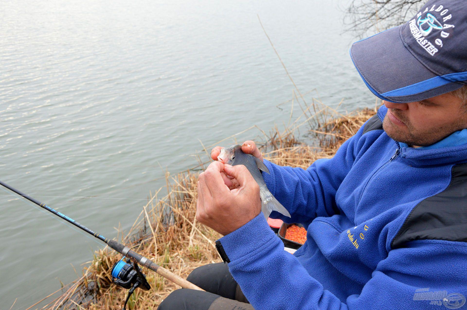 A dévérkeszeg már kora tavasztól aktív, így érdemes célzottan is horgászni rájuk