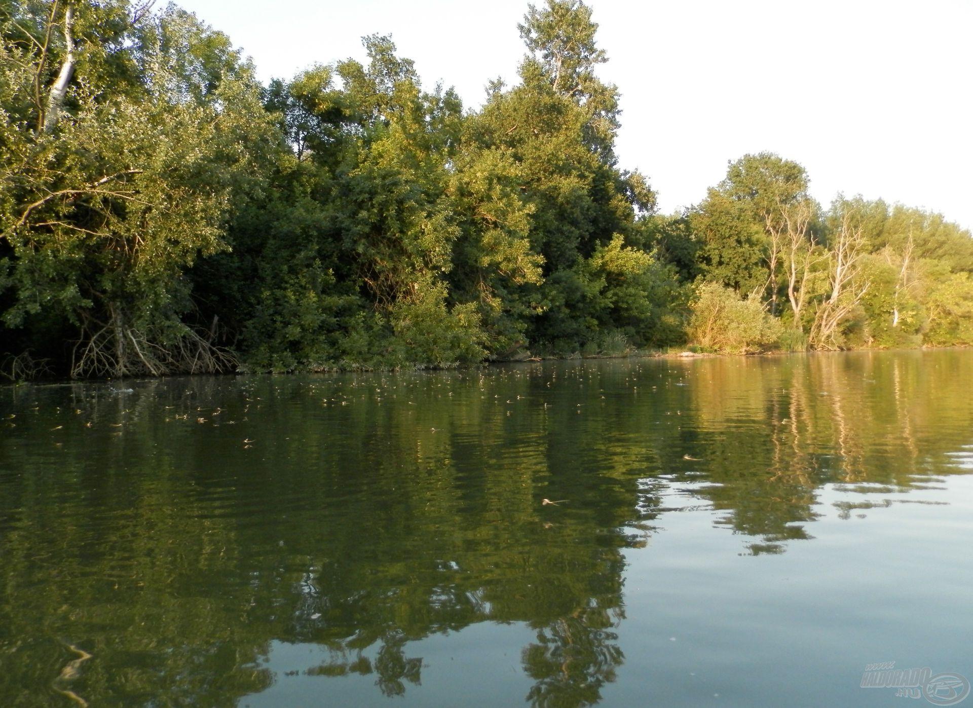 Nekünk az a legjobb eset, amikor nem túl sok, de nem is túl kevés a kérész a folyó felszínén