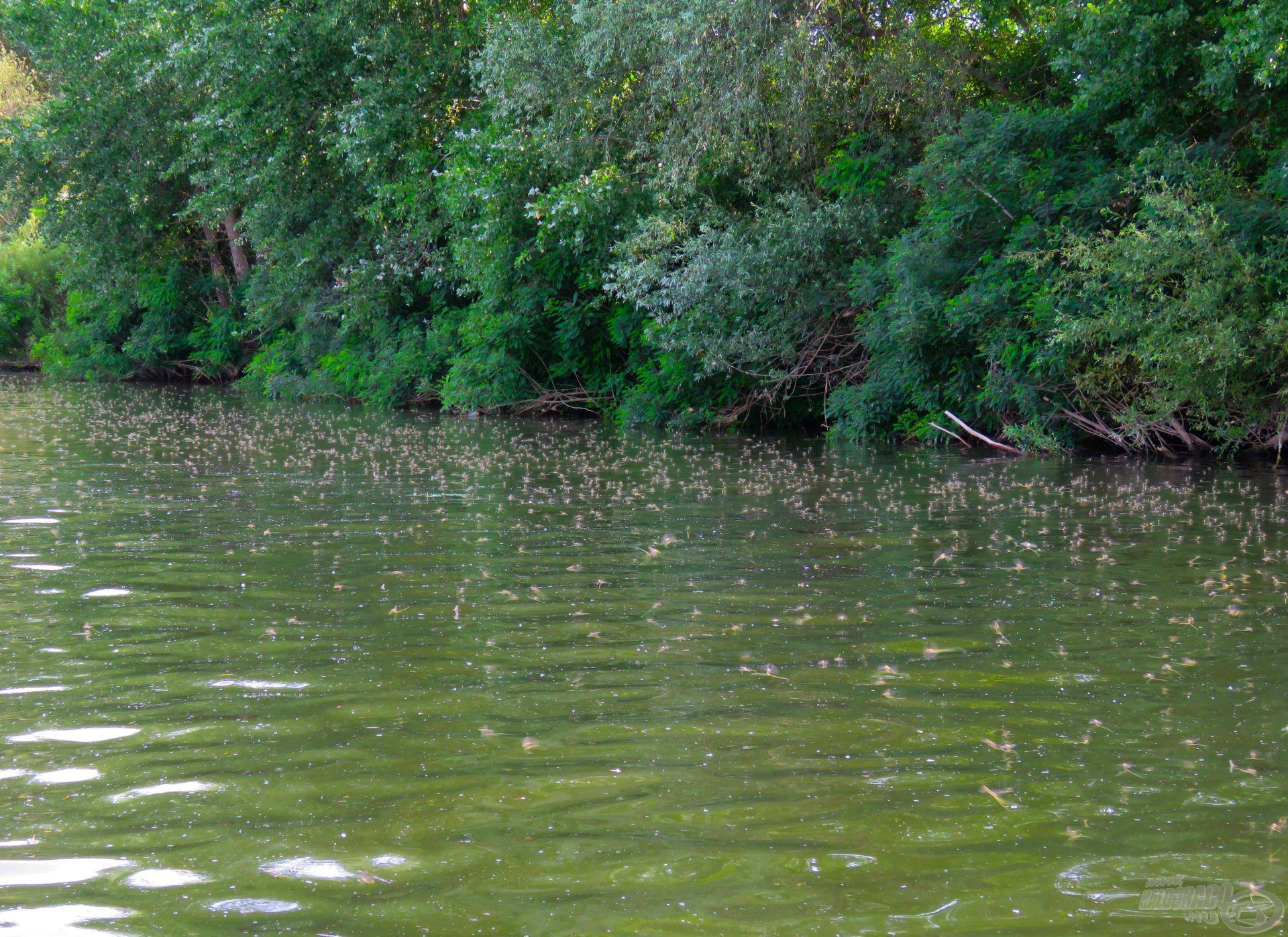 Főrajzás idején nincs sok esélyünk halat fogni