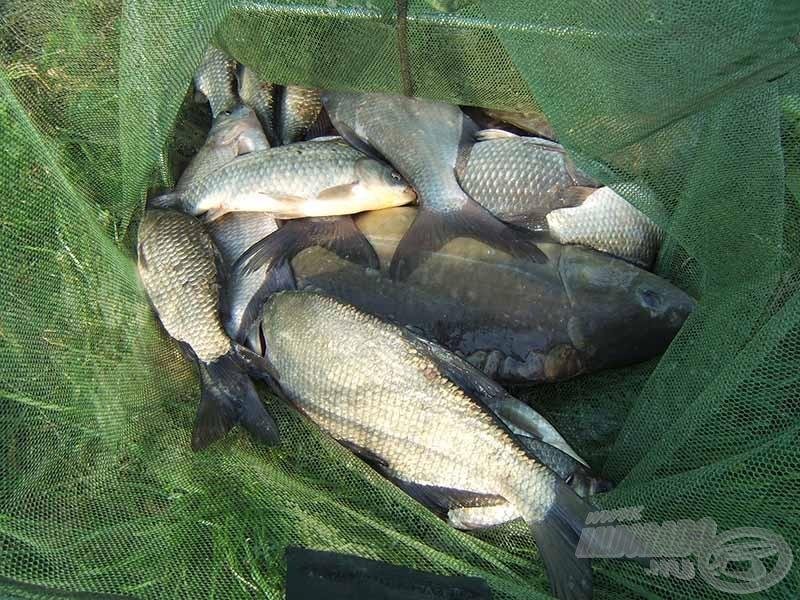 Ilyen fogásokra és halakra lehet majd számítani
