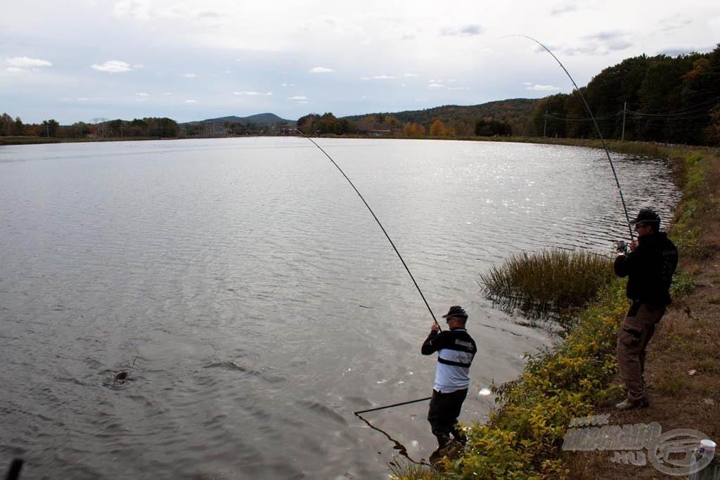 Volt, hogy egyszerre mindkét botomat görbítették a halak, István segített a fárasztásban