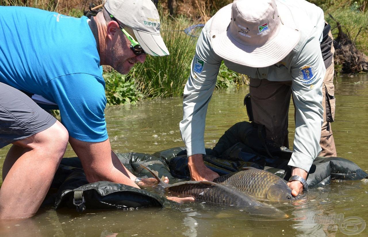 Jó volt látni, hogy milyen tisztelettel és szeretettel bánnak a horgászok a legyőzött nemes ellenfelekkel!