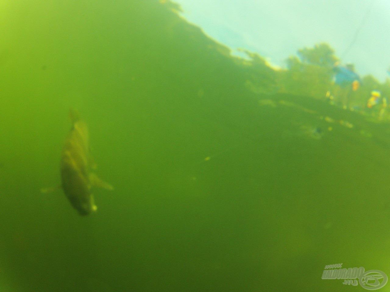 Ritkán látható kép, amikor a menekülő hal szemszögéből látszódik minden
