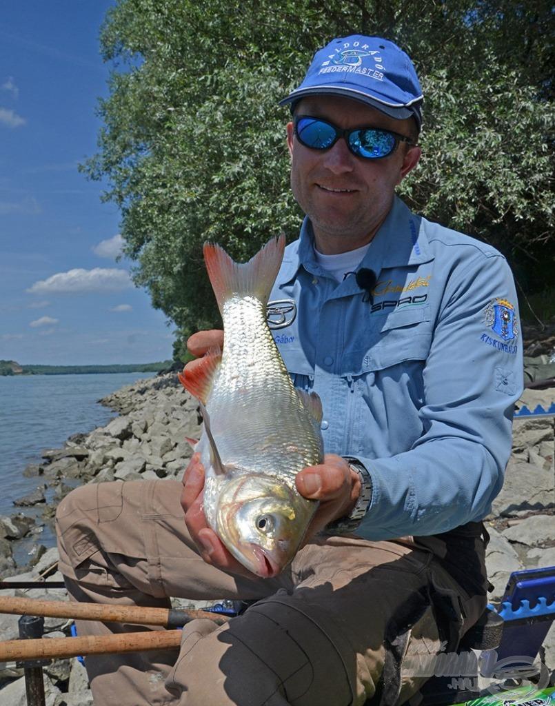 Egy újabb jellegzetes folyóvízi hal a jászkeszeg