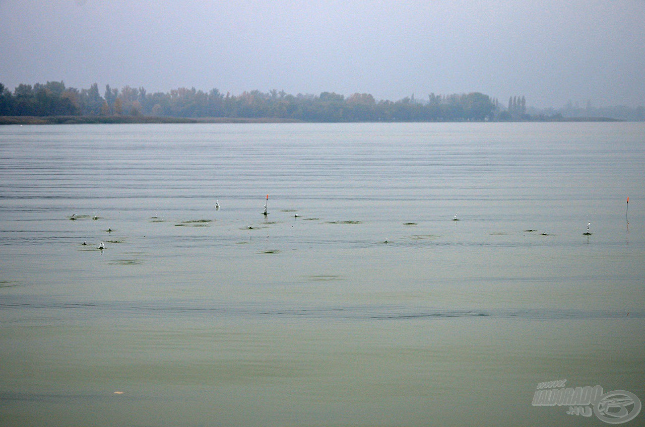 Zsolt egy marék kukoricát dobott az úszói környékére…