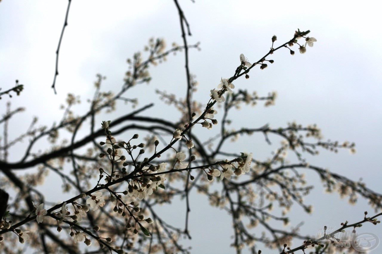 Pompás, színes tavasz