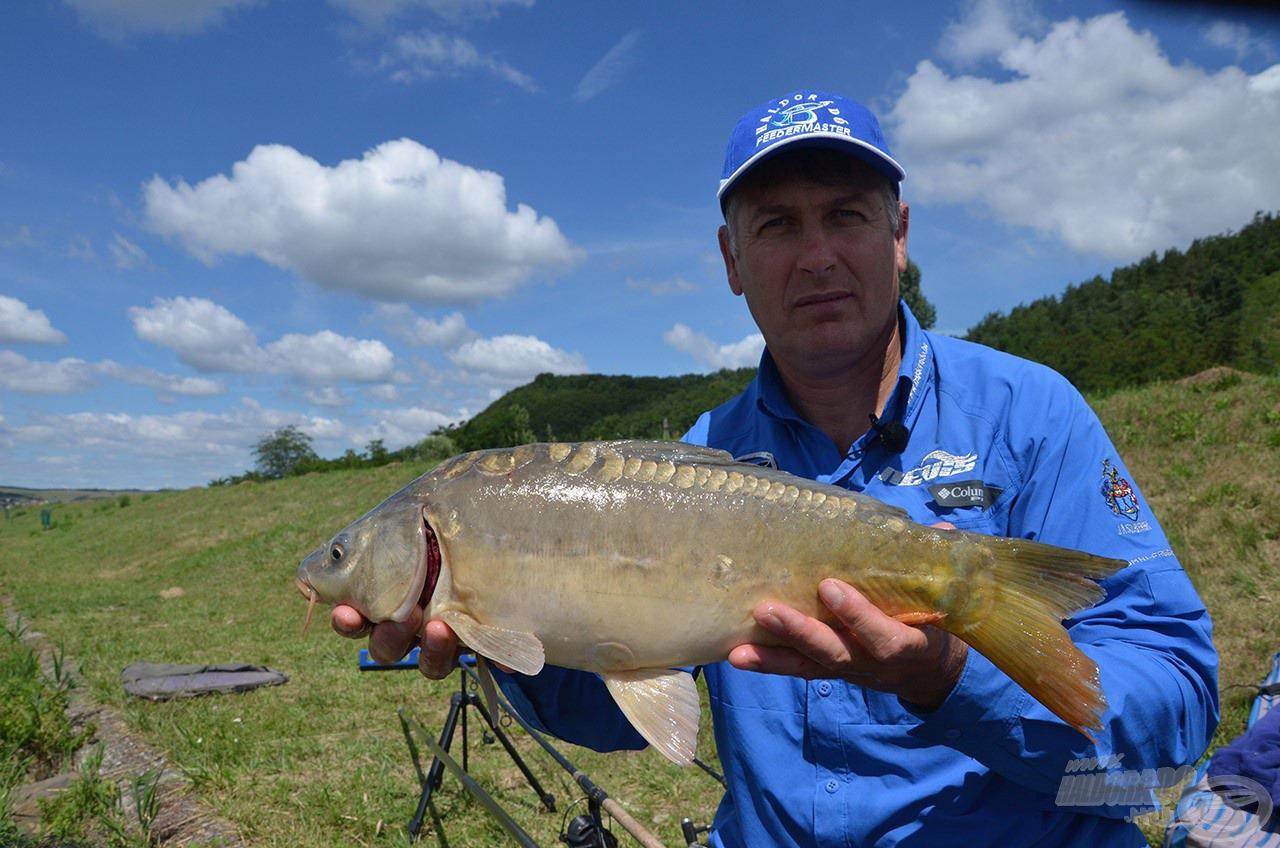 A sekély vízi szakasz jellemző halai az 1-2 kg-os pontyok
