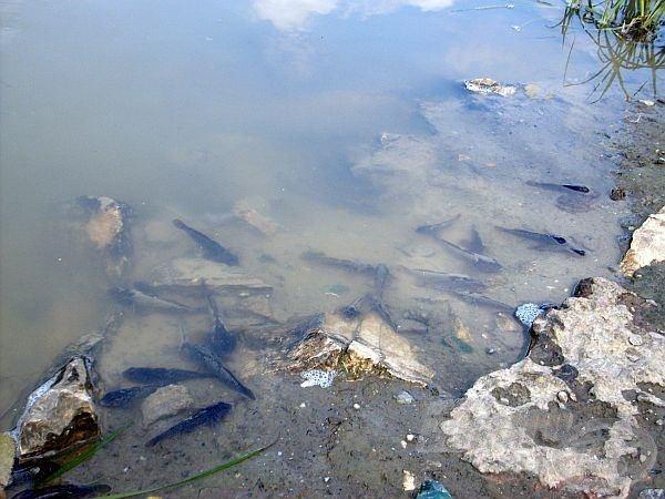 Látszódik, hogy próbáltak a halak menekülni, a part szélébe húzódni, de nem volt hová bújni