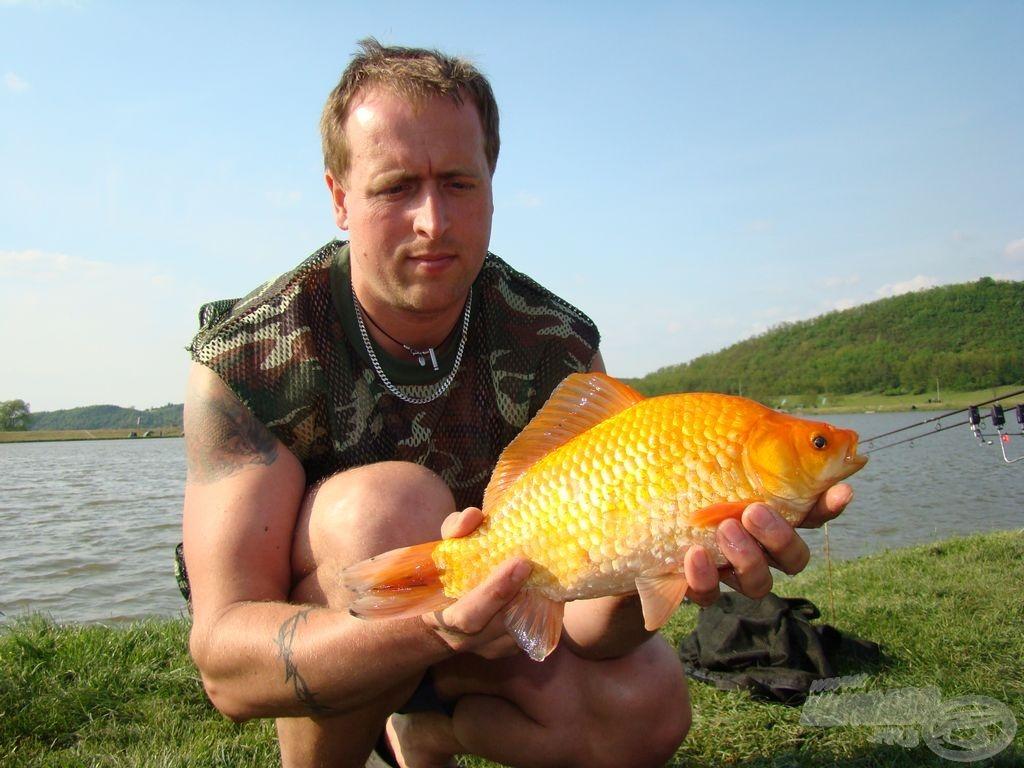 Most műsoron kívül: az aranyhal