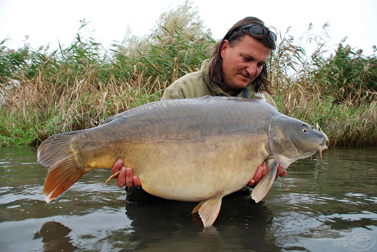 Bordás József a Pontycentrum tulajdonosa és számos pontyos világmárka hazai képviselője. Elismert szaktekintély a nagy halak horgászatában, amit rendszeresen bizonyít is!