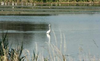Hajnali madárles - Fertő-Hanság Nemzeti Park